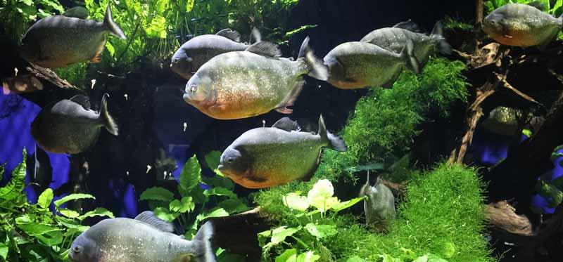 chauffage pour aquarium