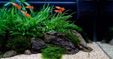 pourquoi tester l'eau de son aquarium