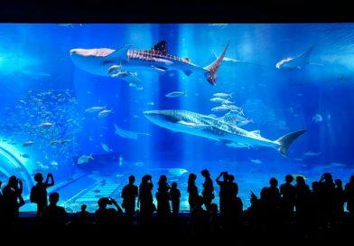 aquarium bon pour la santé